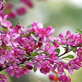 Crabapple Blossom by Lyuba Filatova