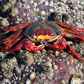 Crabby by Mike Fitzgerald