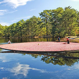 Cranberry Harvest Double Trouble State Park   by Geraldine Scull