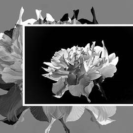 Creative Daffodils by Regina Arnold