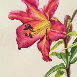 Fiona Craig - Crimson Lily 1