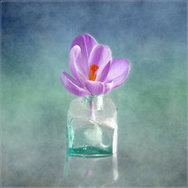 Crocus on Ocean Blue Canvas by Robert Murray
