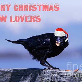Crow Christmas by Jim Hatch