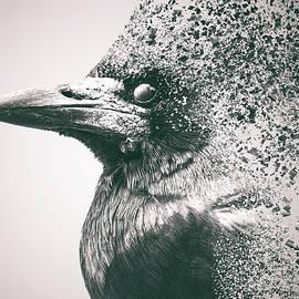 Crow Dispersion - Martin Newman