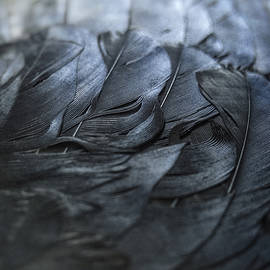 Angie Rea - Crow Feathers