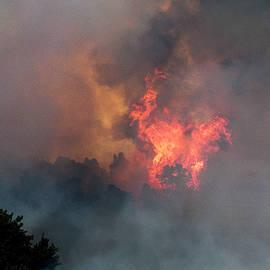 Crown Fire by Robert Potts