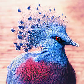 Crowned pigeon by Jaroslav Buna