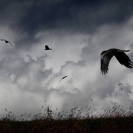 Philip Openshaw - Crows Passing