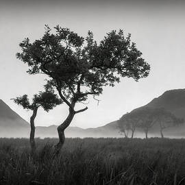 Crummock Water Tree by Dave Bowman