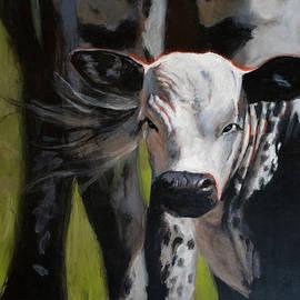 Curious Calf by Christopher Reid