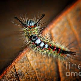 Kasia Bitner - Curious Caterpillar