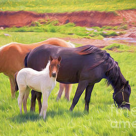 Curious Colt And Mares by Sharon McConnell
