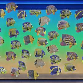 Betsy Knapp - Curious Fish