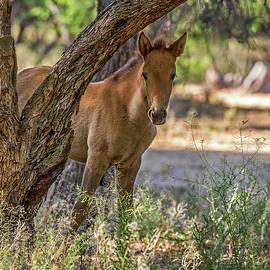 Terry Hawthorne - Curious Foal