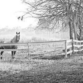 Curious Fog by Scott Hansen