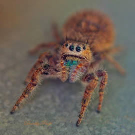 Curious Jumping Spider by Dorothy  Pugh