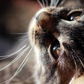 Curious Kitten by Angela Murdock