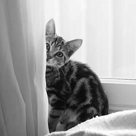 Layla Alexander - Curious Kitten