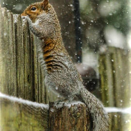 Curious On A Snowy Day by Ola Allen