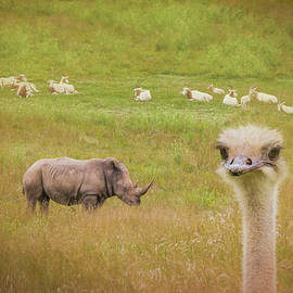 Curious Ostrich and White Rhino - Tom Mc Nemar