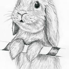 Sergey Lukashin - Curious rabbit