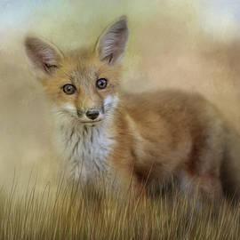 Jai Johnson - Curious Red Fox