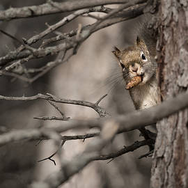 Curious Squirrel by Tammy Lauritsen