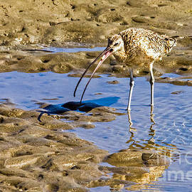 Curlew Catch by Kate Brown