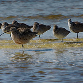 Don Columbus - Curlew Standout