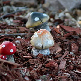 Cluster Of Toadstools  In Fairy Garden by Colleen Cornelius
