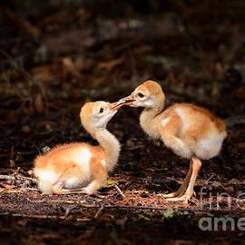 Cute chicks by Zina Stromberg
