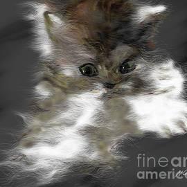 Cute Kitty by Nesrin Gulistan