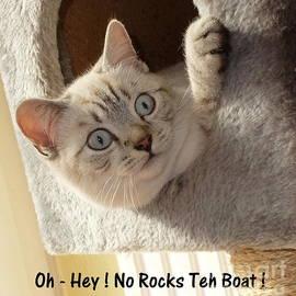 John Chatterley - Cute Kitty Rockin