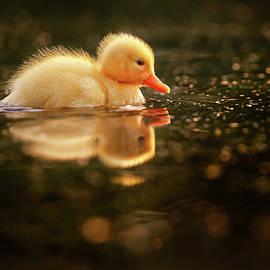 Roeselien Raimond - Cute Overload Series - Baby Duck