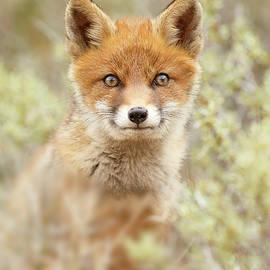 Cute Overload Series - Happy baby Fox - Roeselien Raimond