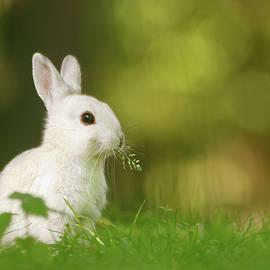 Cute Overload Series - Happy White Rabbit