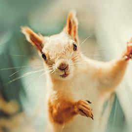 Oksana Ariskina - Cute Squirrel