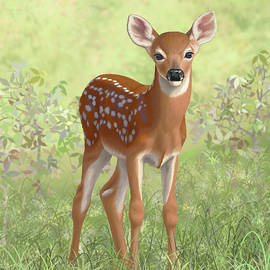 Crista Forest - Cute Whitetail Deer Fawn