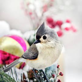 Christina Rollo - Cute Winter Bird - Tufted Titmouse