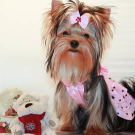 Yana Reint - Cute Yorkie Puppy In Pink Dress