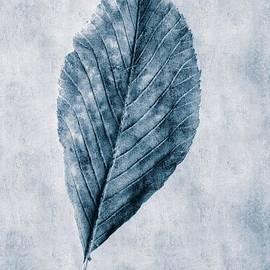 John Edwards - Cyanotype Leaf
