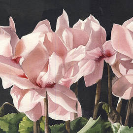 Cyclamen In Pink by Alfred Ng