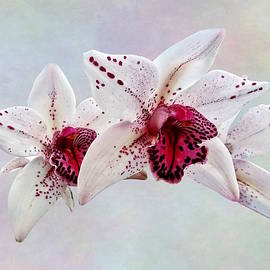 Susan Savad - Cymbidium Baltic Dew Freckle Face