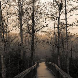 Cypress Boardwalk by Gary Dean Mercer Clark