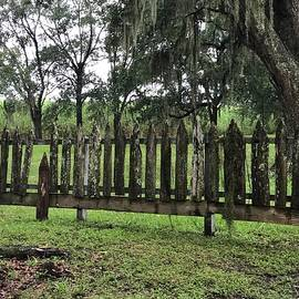 Gloria Diallo - Cypress Fence