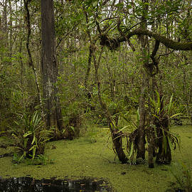 George Kenhan - Cypress Forest