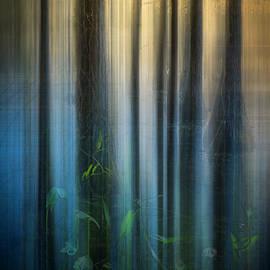 Debra and Dave Vanderlaan - Cypress Swamp Dreamscape