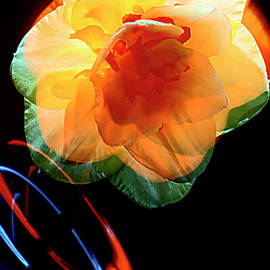 DAFFODIL and GAME of COLORS. by Alexander Vinogradov