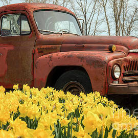 Wildlife Fine Art - Daffodils and Old Truck