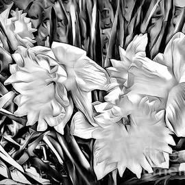 Debra Lynch - Daffodils In Black And White